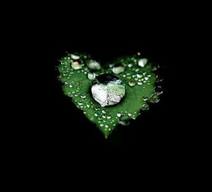 Bir Damla Gözyaşında Boğuldu Yeşil Yaprak